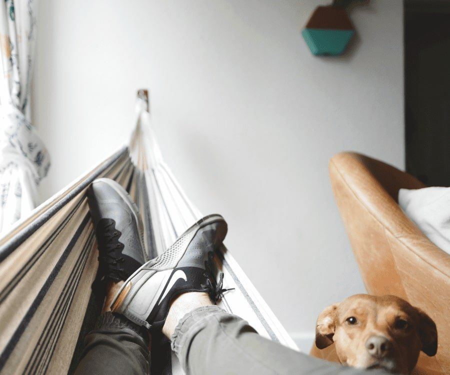 Men lying in a hammock while a dog is watching: Husbands prefer to stay at home on their birthday